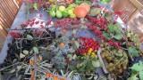 14439-jardin-botanique-avapessa-2019-5-19062-6623